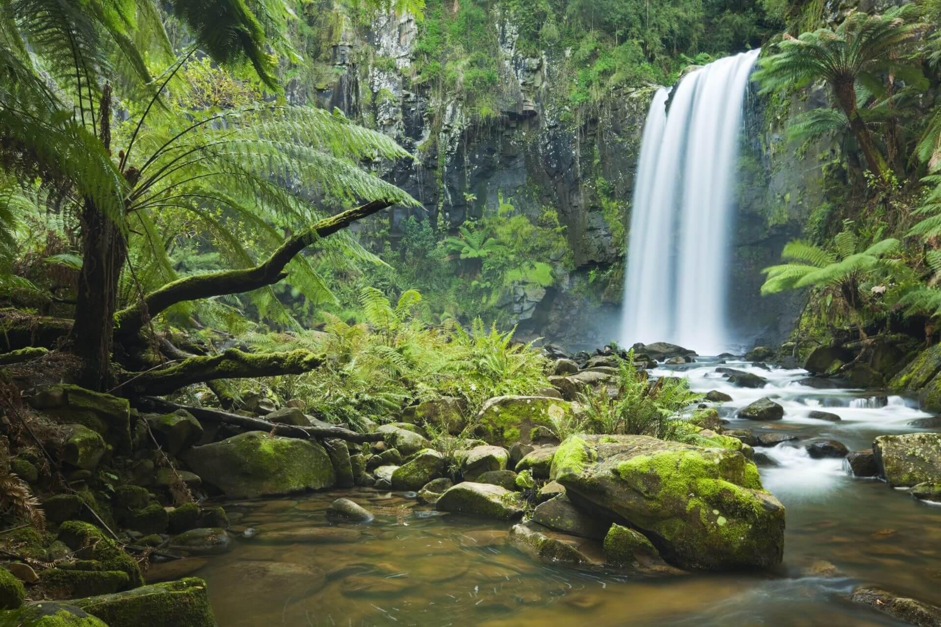Der Hopetoun Falls im Great Otway National Park in Victoria
